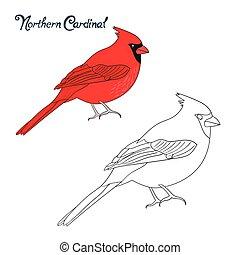 pédagogique, coloration, jeu, livre, cardinal, oiseau