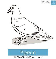 pédagogique, pigeon, jeu, vecteur, apprendre, oiseaux