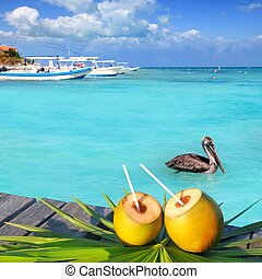 pélican, antilles, cocktail, noix coco, frais, natation