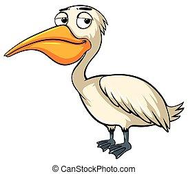 pélican, oiseau blanc, fond