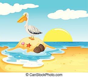 pélican, plage, oiseau