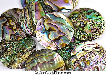 pérola, mãe, conchas