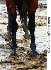 pés, cavalo