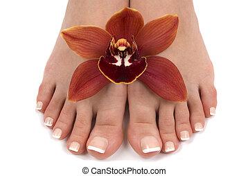 pés, orquídea