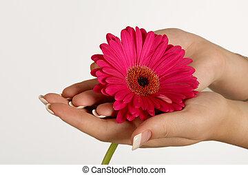 pétala cor-de-rosa