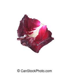 pétala flor, isolado, fundo, rosa, branca