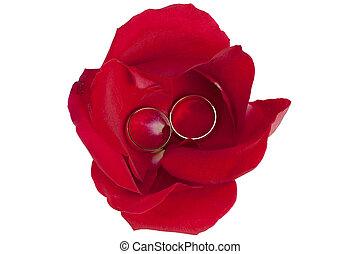 pétales, anneaux, rose