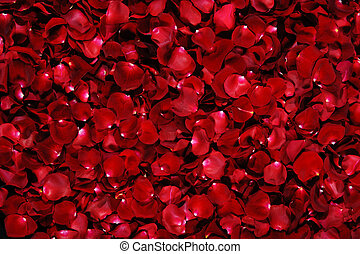 pétales, fond, rose rouge