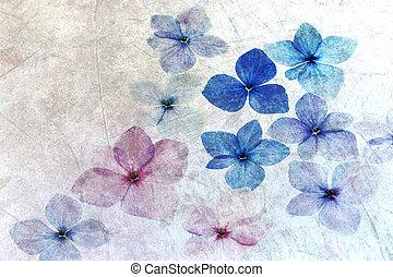pétales, hortensia, texture, voile de surface