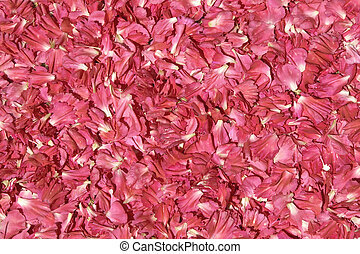 pétales, quinquies, rouges