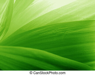 pétales, vert