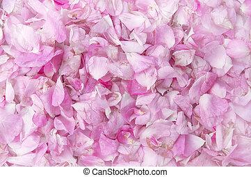 pétalos, de, un, rosas rosa, texture.