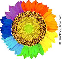 pétalos, diferente, rainbow., colores, girasol