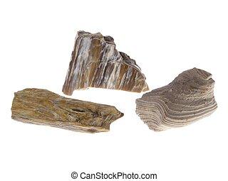 pétrifié, pologne, wood., origin: