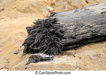 pétrifié, sable, bois
