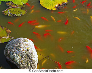 pêcher étang, jardin