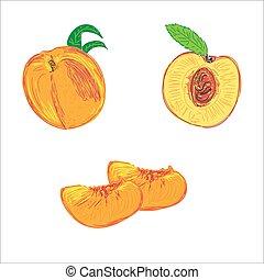 pêssegos, esboço, vetorial, ilustração, estilo