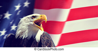 północ, usa, tło, (haliaeetus, portret, flag., łysy orzeł, amerykanka, leucocephalus)