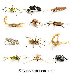 pókféle, és, férgek