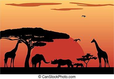 pôr do sol, áfrica