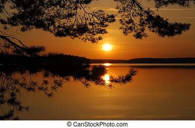 pôr do sol, árvore