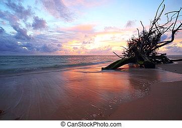 pôr do sol, árvore morta, em, a, mar, em, naiyang, praia, phuket, tailandia