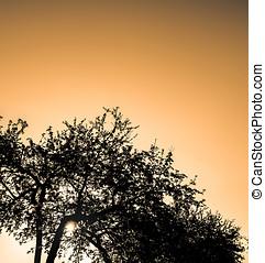 pôr do sol, árvores