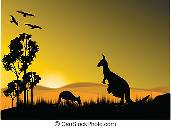 pôr do sol, canguru, horizion