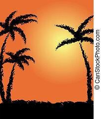 pôr do sol, coco-trees