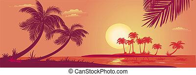 pôr do sol, com, palmas, mar