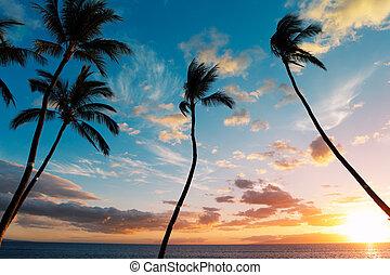 pôr do sol, coqueiros, em, havaí