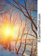 pôr-do-sol costa, de, pequeno, gelado, rio, em, floresta, instagram, stile