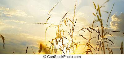pôr do sol, durante, arte, campo grama