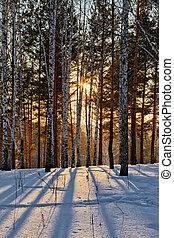 pôr do sol, em, inverno, floresta