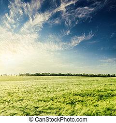 pôr do sol, em, profundo, céu azul, sobre, verde, campo agricultura