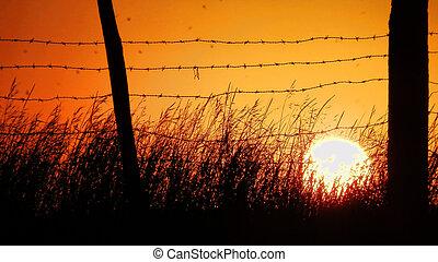 pôr do sol, em, verão