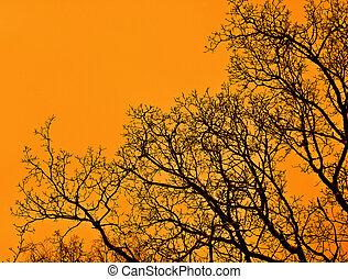 pôr do sol, floresta