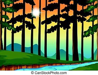 pôr do sol, floresta, cena