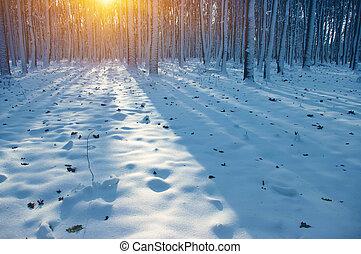 pôr do sol, floresta, inverno