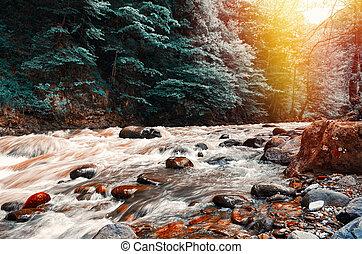 pôr do sol, floresta, riacho