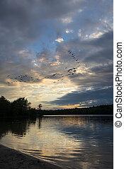pôr do sol, gansos, lago