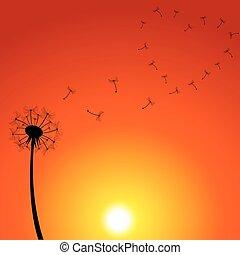 pôr do sol, ilustração, dandelion