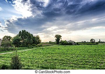 pôr do sol, ligado, cultivado, campos