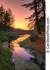 pôr do sol, ligado, um, remoto, floresta, lago