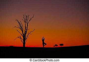 pôr do sol, meditação, vriksasana