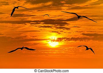 pôr do sol, pássaros voando