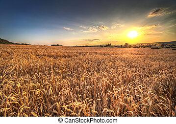 pôr do sol, paisagem, em, polônia