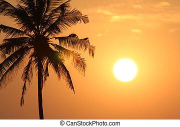 pôr do sol, paraisos
