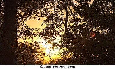 pôr do sol, parque