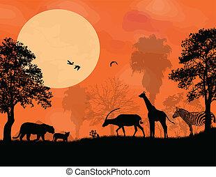 pôr do sol, safari